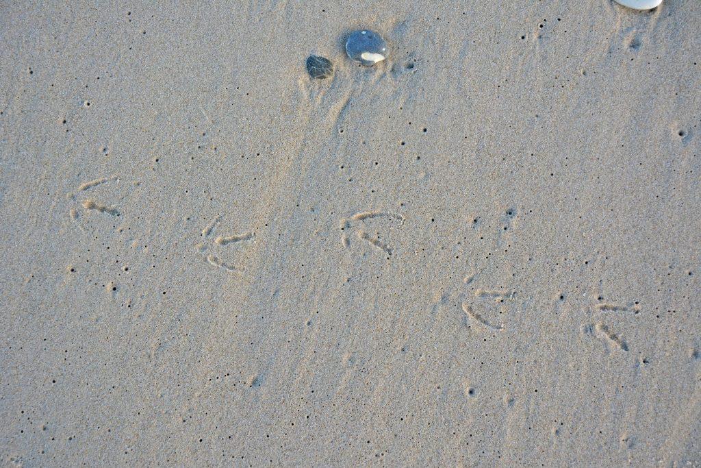 Fodspor i sandet efter måge